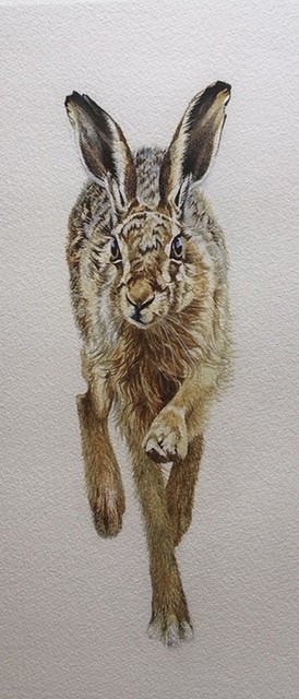 Painting of a hare by Irene Brierton