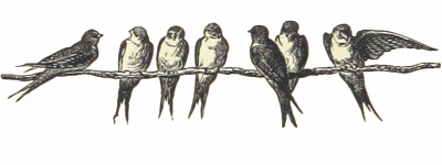 drawing of some swifts on a wire
